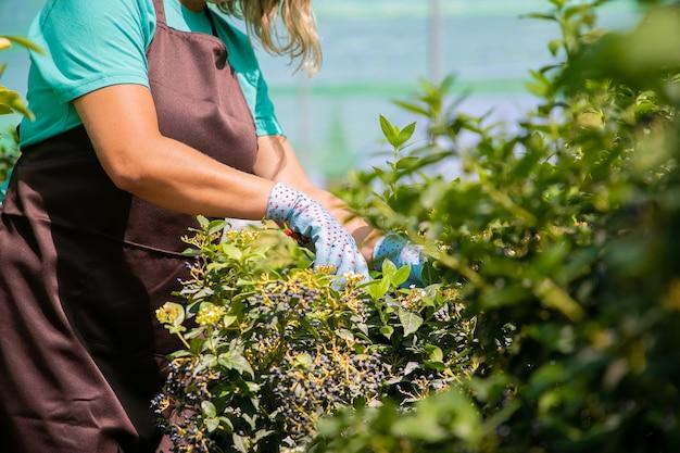 Żeński kwiaciarnia tnący krzew z sekatorem w szklarni. kobieta pracująca w ogrodzie, uprawa roślin w doniczkach. przycięte zdjęcie. koncepcja pracy w ogrodzie