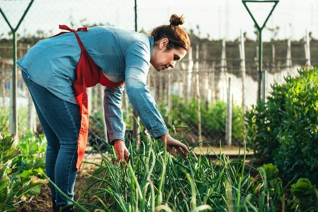 Żeński rolnik egzamininuje cebulkowego pole w organicznie gospodarstwie rolnym