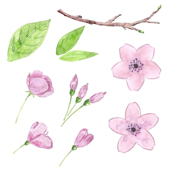 Zestaw akwarela kwiat wiśni