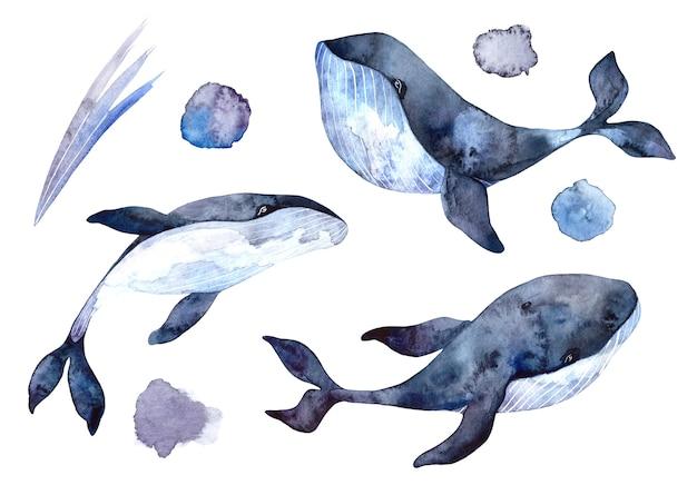 Zestaw akwarela wielorybów, ręcznie malowane ilustracje na białym tle, realistyczne zwierzęta podwodne