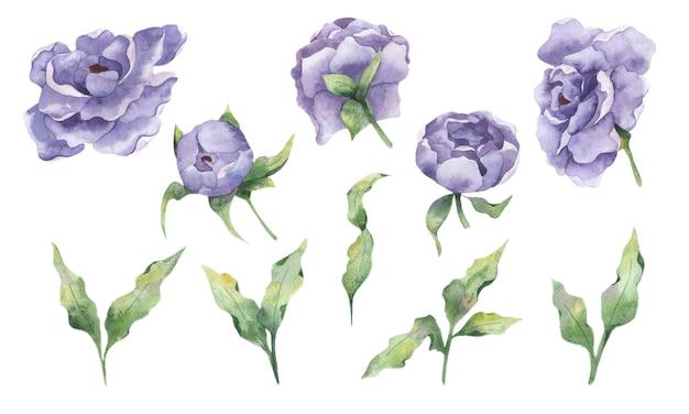Zestaw akwareli z kwiatami bzu piwonii i gałązkami liści na białym tle