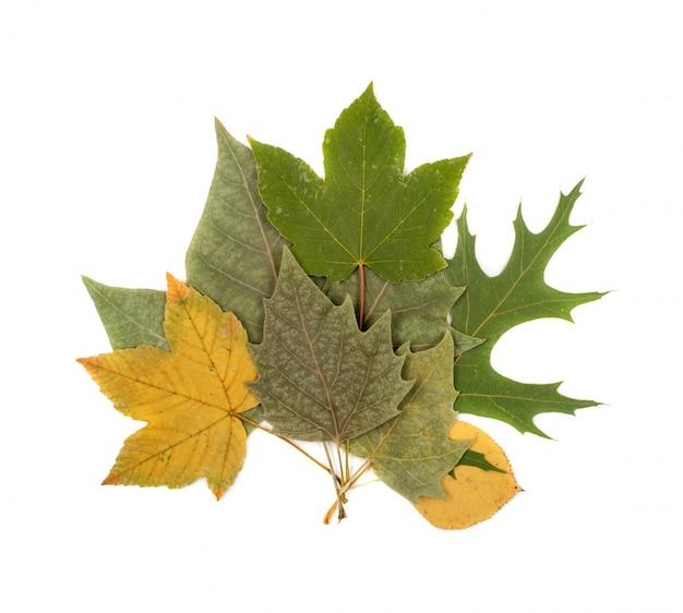 Zestaw bukiet suchych liści na białym tle