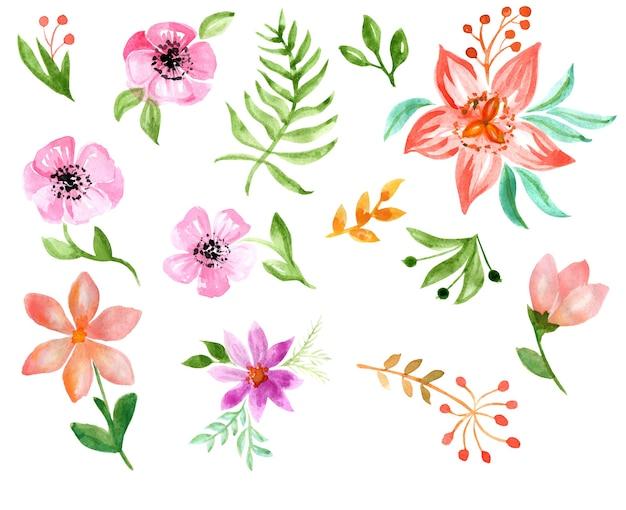 Zestaw elementów akwareli polne kwiaty zioła liście kolekcja ziół ogrodowych i dzikich lasów