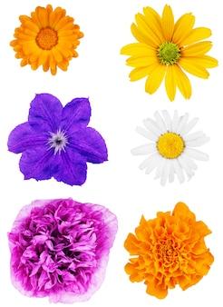 Zestaw główek kwiatów na białym tle