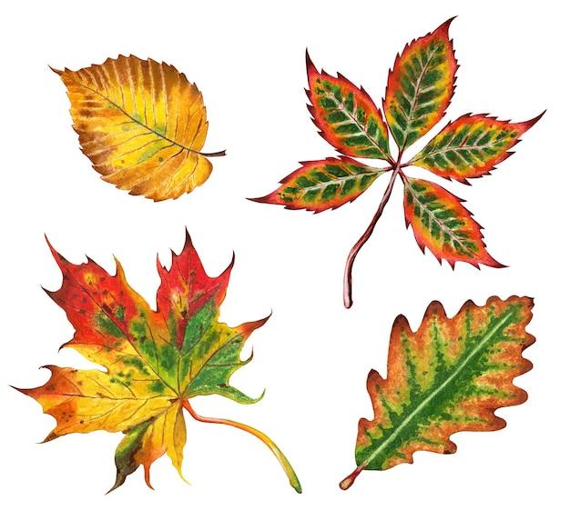 Zestaw jesiennych liści wiąz klonu dębowego i kasztanów ilustracja jesień handdrawn izolowany