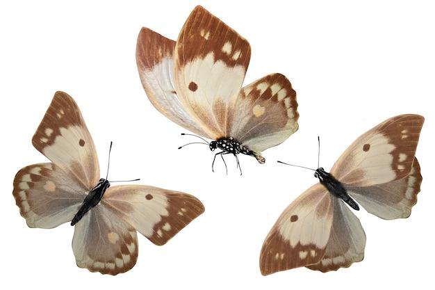 Zestaw kolorowych tropikalnych motyli na białym tle