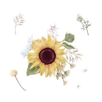 Zestaw ładny słoneczniki kwiaty gałęzie i liście. ilustracja akwarela
