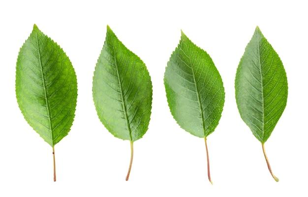 Zestaw liści na białym tle