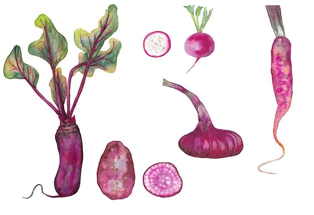 Zestaw marchewki, buraków, cebuli, rzodkiewki i ziemniaków z plastrami. akwarela ilustracja