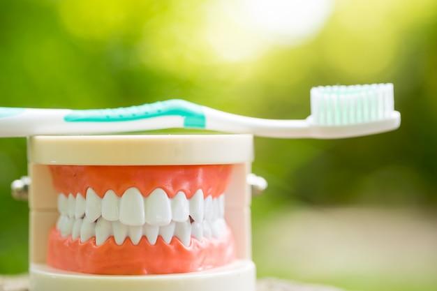 Zestaw narzędzi dentystycznych sprzętu medycznego w parku