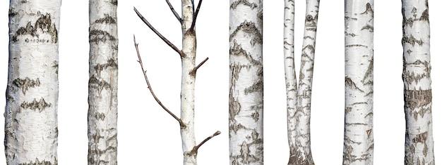 Zestaw naturalnych pni brzozy na białym tle