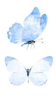 Zestaw niebieskich motyli na białym tle na białym tle. zdjęcie wysokiej jakości