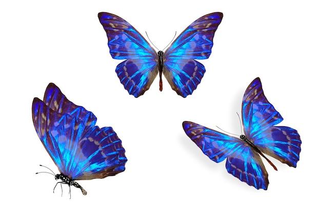 Zestaw niebieskich tropikalnych błyszczących motyli. na białym tle
