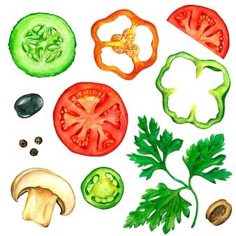 Zestaw plastry warzyw rysowane w akwareli