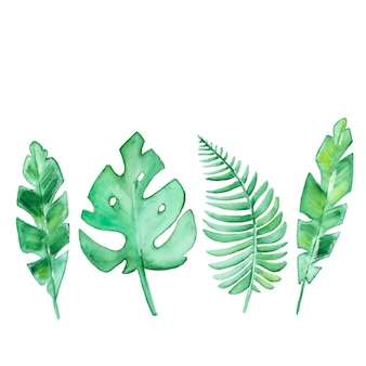 Zestaw prostych liści tropikalnych