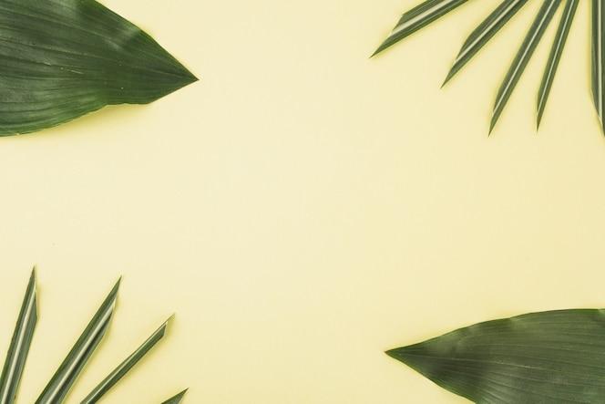 Zestaw różnych liści palmowych
