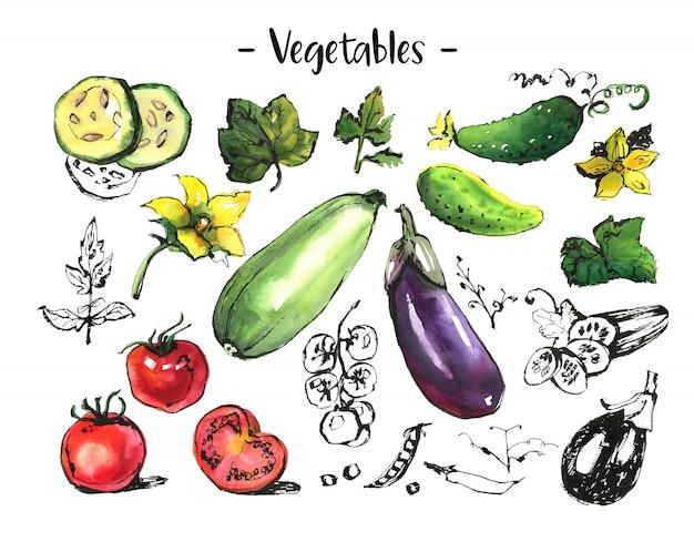 Zestaw różnych warzyw wayercolor i tuszu