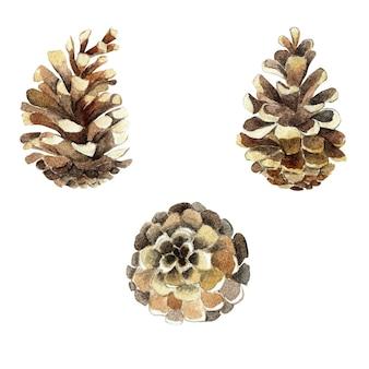 Zestaw sosnowych szyszek jodłowych botaniczny ręcznie rysowane akwarela ilustracja na białym tle boże narodzenie sosna jodła