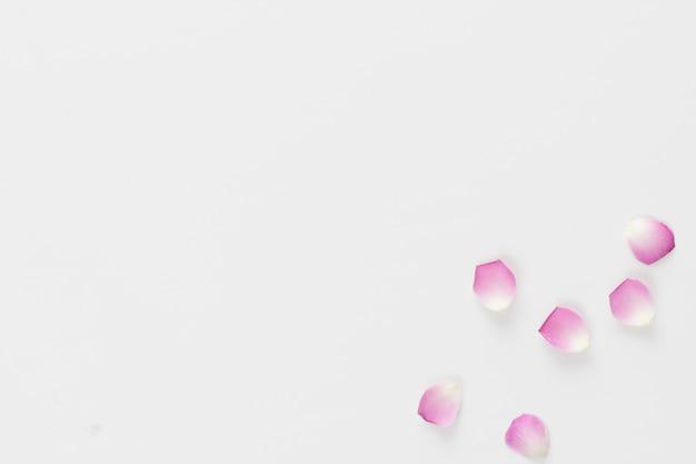 Zestaw świeżych płatków róży