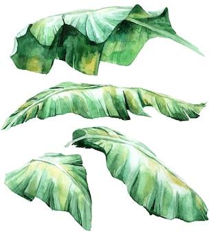 Zestaw tropikalny akwarela liści