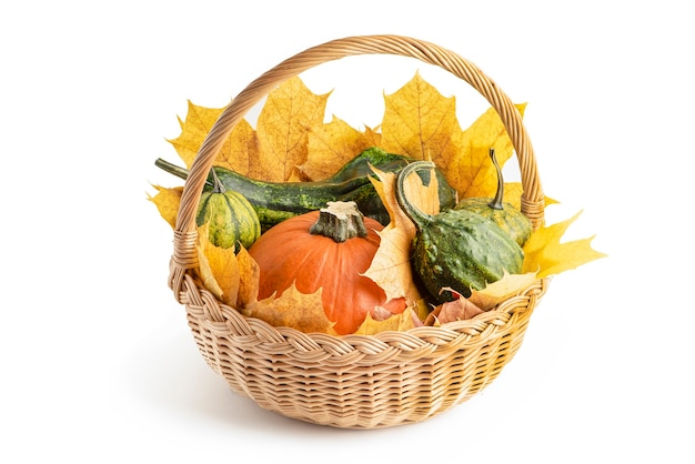 Zestaw wielokolorowych dyń w wiklinowym koszu, z liśćmi klonu do dekoracji na halloween. wyizoluj na białym tle. jesienny zestaw ozdobnych dyni i liści klonu.