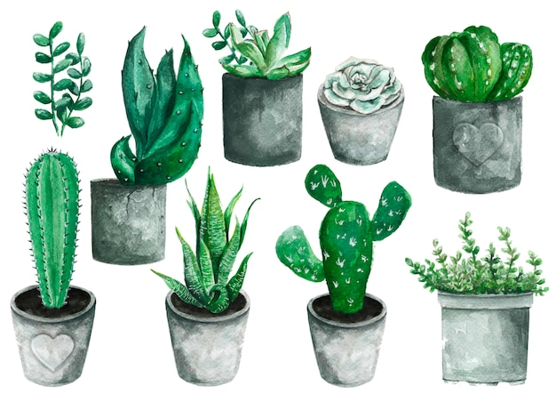 Zestaw wysokiej jakości ręcznie malowanych elementów akwarelowych do projektowania z sukulentów, kaktusów.