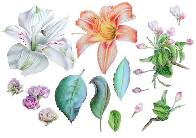 Zestaw z kwiatami. lilia. alstroemeria. kwitnąć. pozostawia. akwarela ilustracja. wyciągnąć rękę.