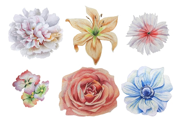 Zestaw z kwiatami. róża. alstroemeria. piwonia. lilia. anemon. róża. akwarela ilustracja. wyciągnąć rękę.