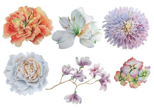 Zestaw z kwiatami. róża. piwonia. alstroemeria. aksamitka. akwarela ilustracja. wyciągnąć rękę.
