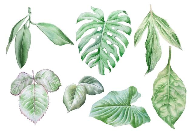 Zestaw z liśćmi. akwarela ilustracja. wyciągnąć rękę.