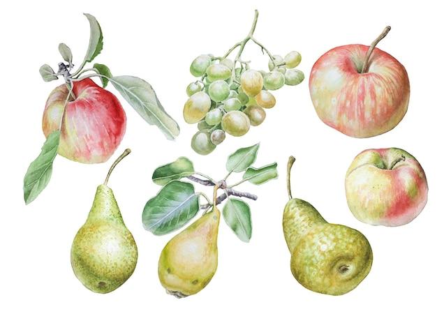 Zestaw z owocami. jabłko. gruszka. winogrono. akwarela ilustracja. wyciągnąć rękę.