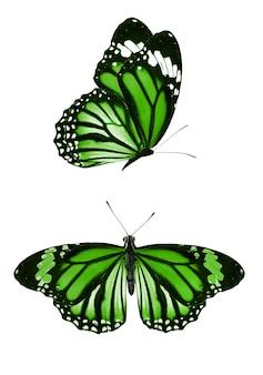 Zestaw zielonych motyli na białym tle na białym tle. zdjęcie wysokiej jakości