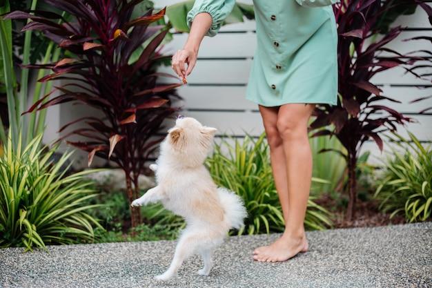 Zewnątrz portret kręcone opalona europejska kobieta trzyma szczęśliwy pies szpic pomorski
