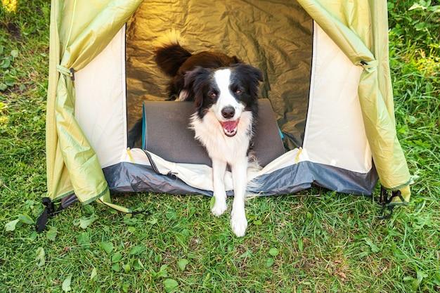 Zewnątrz portret ładny zabawny szczeniak border collie, leżąc wewnątrz w namiocie kempingowym