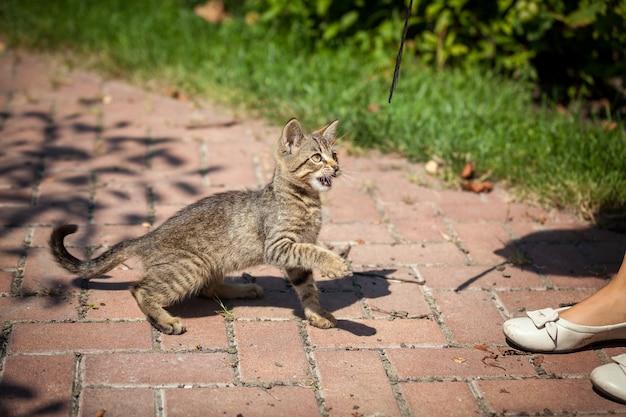 Zewnątrz strzał ładny kotek w ogrodzie w słoneczny dzień