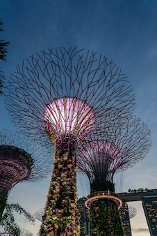 Zewnętrzne ogrody nad zatoką w singapurze
