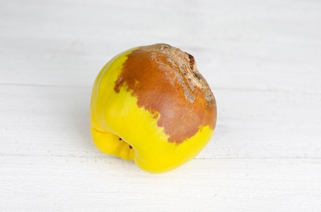 Zgniły owoc pigwy
