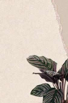 Zgrana kartka papierowa z zieloną rośliną
