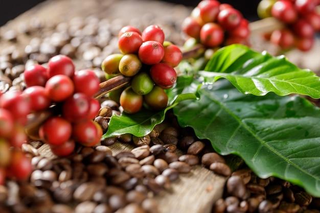 Ziarna kawy na kawowych zielonych liściach na drewnianym tle, świeże ziarna kawy na drewnianym tle