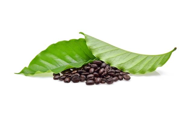 Ziarna kawy z liści kawy na białym tle
