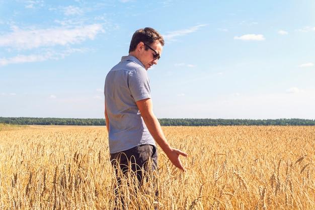 Ziarna pszenicy w rękach rolnika na tle pola pszenicy. dojrzałe ucho w dłoni mężczyzny. zbiór zbóż. motyw rolniczy.