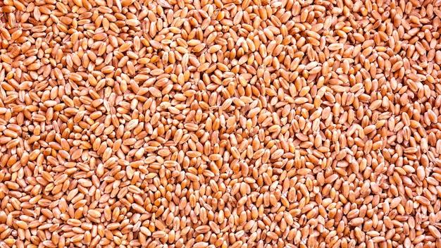 Ziarno pszenicy jako tekstura tło