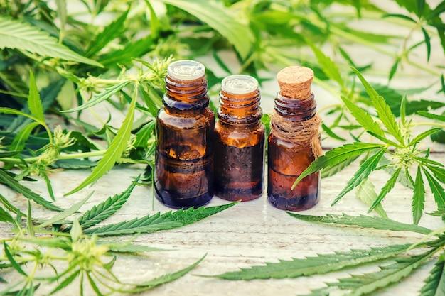 Ziele konopi i liście do bulionu leczniczego, nalewki, ekstraktu, oleju. selektywne skupienie.