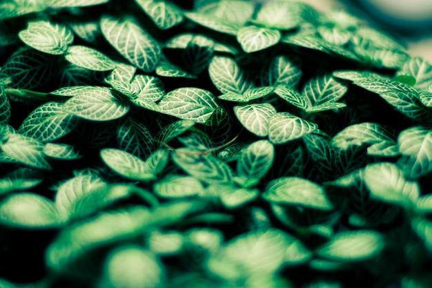 Zieleń liści deseniowy tło, naturalny tło i tapeta. tło