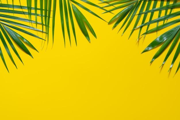 Zieleń liście drzewko palmowe na żółtym tle.