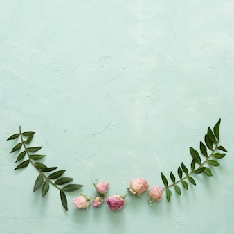 Zieleń liście i piękny róża pączek na textured zielonym tle