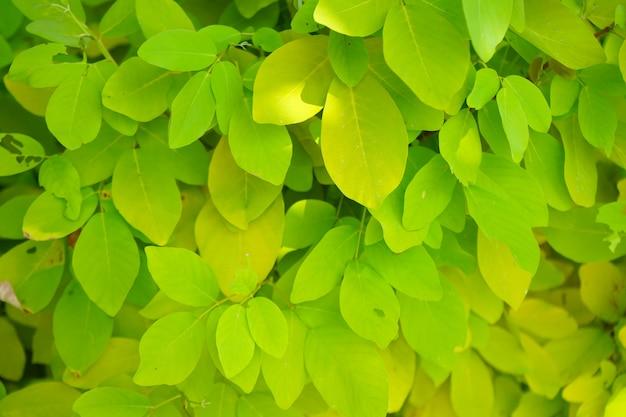 Zieleń liście i żółty kolor z naturalnym światłem dziennym w ogrodowym tle