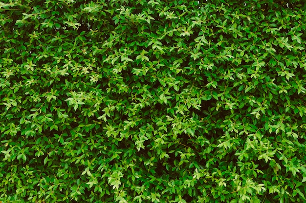 Zieleń liście izolują tło, roślina na ścianie