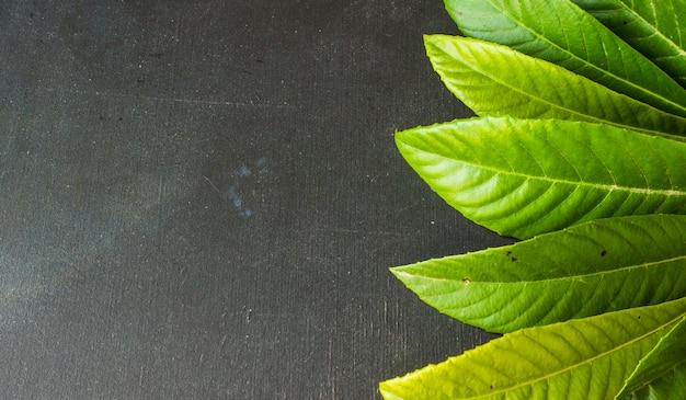 Zieleń liście na ciemnym tle, organicznie pojęcie