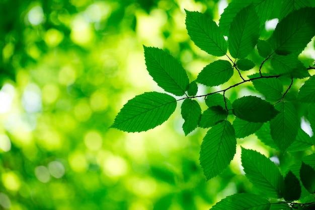 Zieleń liście na zielonych tło